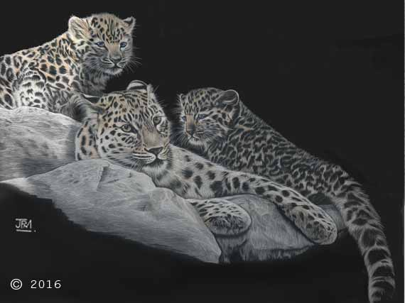 leopard_family