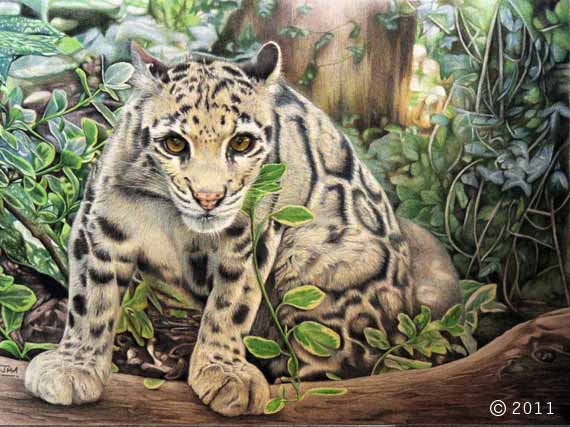 mandaley_clouded_leopard